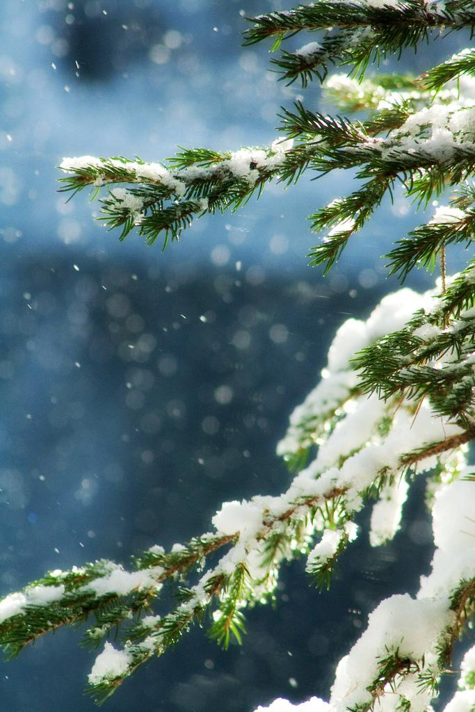 Зимние помощники: 8 масел, без которых не обойтись в холода.